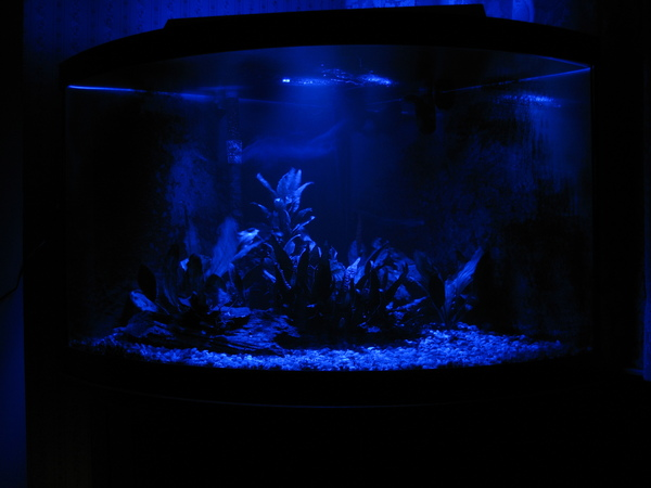 LED Lunar lights on 54G aquarium